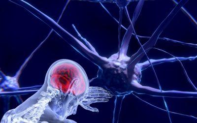 Qu'est-ce que les systèmes nerveux sympathique et parasympathique ?