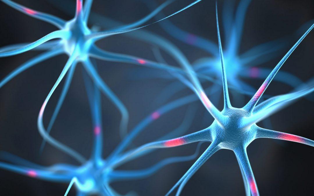 Qu'est-ce que les systèmes nerveux somatique et autonome (végétatif) ?
